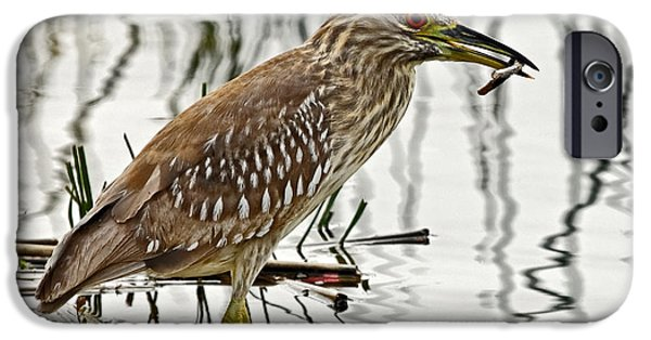 Juvenile Wall Decor iPhone Cases - Solitary Juvenile iPhone Case by Dawn Currie