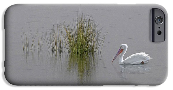 Sea Birds iPhone Cases - Solitude iPhone Case by Phil Jensen