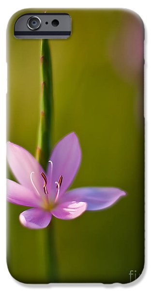Star Of Bethlehem iPhone Cases - Solo Crocus iPhone Case by Mike Reid