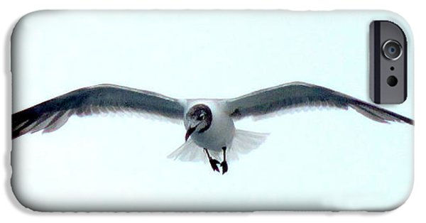 Animals Photographs iPhone Cases - Solo Flight iPhone Case by Randall Weidner