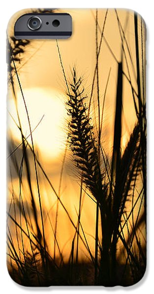 solstice iPhone Case by Laura  Fasulo