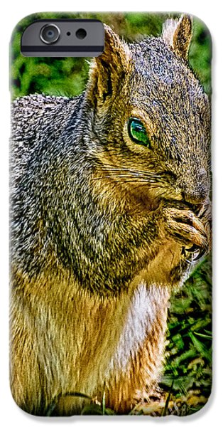 Cathedral Rock iPhone Cases - SOME Squirrels are Big iPhone Case by  Bob and Nadine Johnston