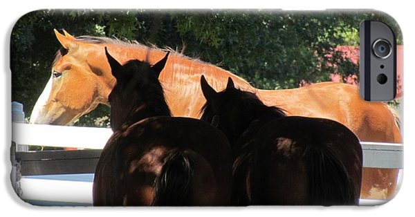Horse iPhone Cases - Someday iPhone Case by Nicole Engelhardt