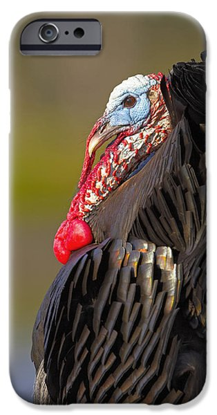 Best Sellers -  - Eastern Wild Turkey iPhone Cases - Someones Son iPhone Case by Jack Milchanowski