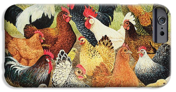 Chickens iPhone Cases - Something To Crow About iPhone Case by Pat Scott