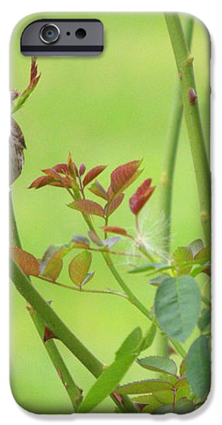 Song Sparrow iPhone Case by Rima Biswas