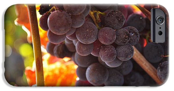 Sonoma iPhone Cases - Sonoma grapes iPhone Case by Michael Dyer