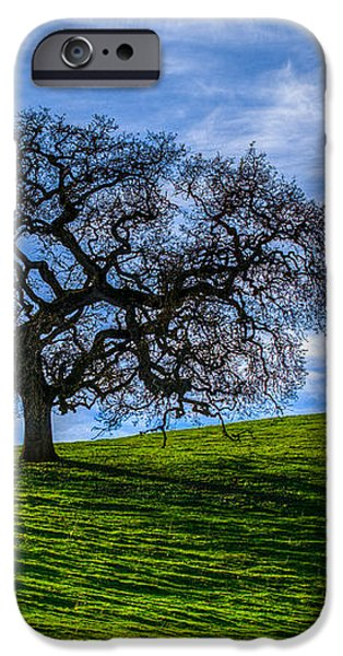Sonoma Tree iPhone Case by Chris Austin