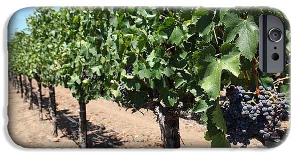 Valley Of The Moon iPhone Cases - Sonoma Vineyards In The Sonoma California Wine Country 5D24491 iPhone Case by Wingsdomain Art and Photography