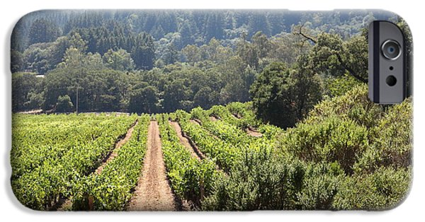 Pastoral Vineyard iPhone Cases - Sonoma Vineyards In The Sonoma California Wine Country 5D24518 iPhone Case by Wingsdomain Art and Photography
