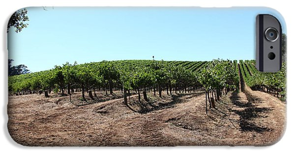 Pastoral Vineyard iPhone Cases - Sonoma Vineyards In The Sonoma California Wine Country 5D24597 iPhone Case by Wingsdomain Art and Photography