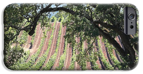 Pastoral Vineyard iPhone Cases - Sonoma Vineyards In The Sonoma California Wine Country 5D24619 square iPhone Case by Wingsdomain Art and Photography