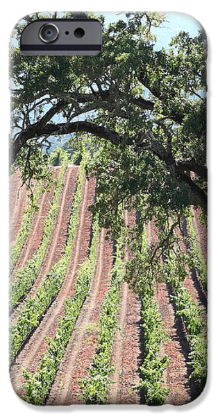Sonoma Vineyards In The Sonoma California Wine Country 5D24619 square iPhone Case by Wingsdomain Art and Photography