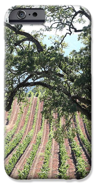 Pastoral Vineyard iPhone Cases - Sonoma Vineyards In The Sonoma California Wine Country 5D24619 vertical iPhone Case by Wingsdomain Art and Photography