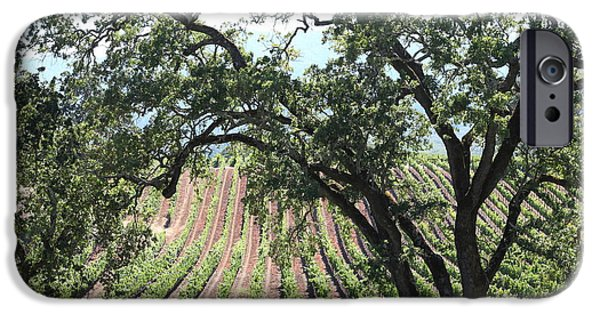 Pastoral Vineyard iPhone Cases - Sonoma Vineyards In The Sonoma California Wine Country 5D24619 iPhone Case by Wingsdomain Art and Photography