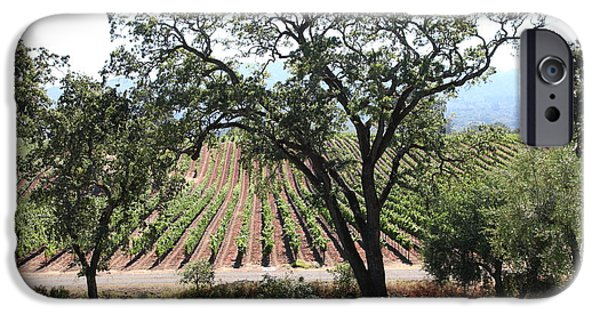 Pastoral Vineyard iPhone Cases - Sonoma Vineyards In The Sonoma California Wine Country 5D24620 iPhone Case by Wingsdomain Art and Photography
