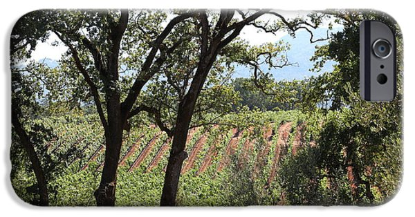 Pastoral Vineyard iPhone Cases - Sonoma Vineyards In The Sonoma California Wine Country 5D24622 iPhone Case by Wingsdomain Art and Photography