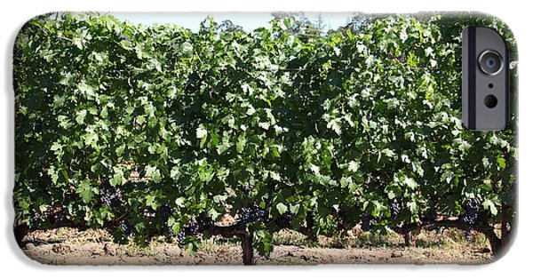 Pastoral Vineyard iPhone Cases - Sonoma Vineyards In The Sonoma California Wine Country 5D24636 iPhone Case by Wingsdomain Art and Photography