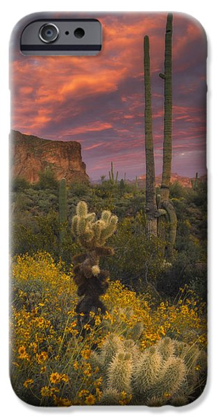 Peter Coskun iPhone Cases - Sonoran Romance iPhone Case by Peter Coskun