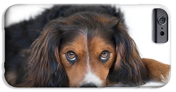 Dog Photograph Canvas iPhone Cases - Soulful Black Tan and White Pup iPhone Case by Natalie Kinnear