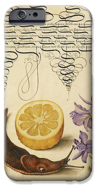 Botanic Illustration iPhone Cases - Sour Orange Terrestrial Mollusk iPhone Case by Getty Research Institute