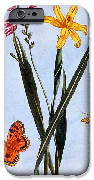 Lilies iPhone Cases - South American Ixia iPhone Case by Pierre Joseph Buchoz