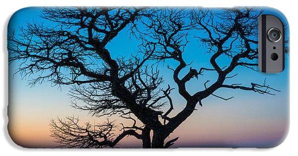 Drama iPhone Cases - South Rim Tree iPhone Case by Inge Johnsson