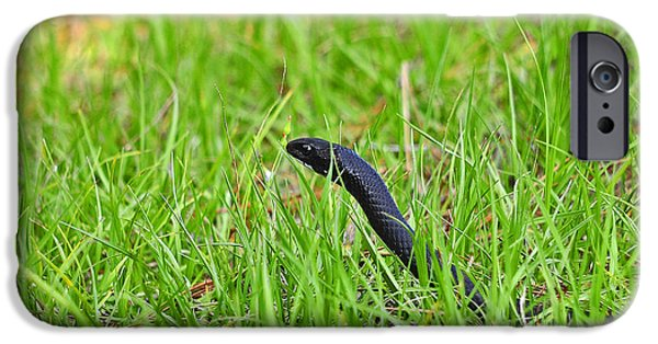 Serpent iPhone Cases - Southern Black Racer iPhone Case by Al Powell Photography USA