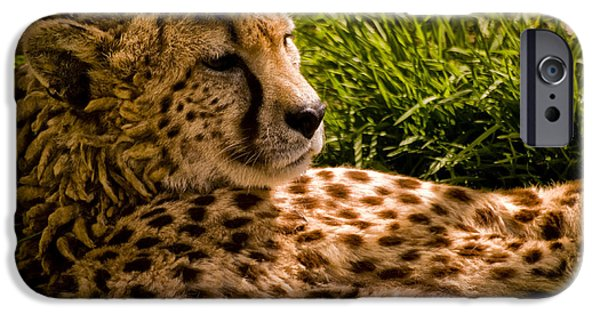 Large Cats iPhone Cases - Southern Cheetah - Acinonyx jubatus iPhone Case by Jay Lethbridge