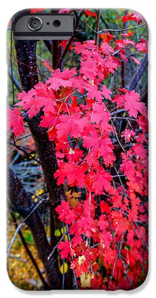 Fall Season iPhone Cases - Southern Fall iPhone Case by Chad Dutson