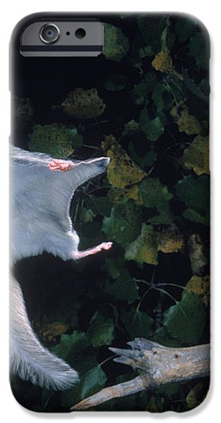 Southern Flying Squirrel iPhone Case by Nick Bergkessel Jr