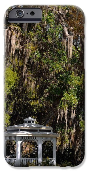 Bromeliad iPhone Cases - Southern Gothic in Mount Dora Florida iPhone Case by Christine Till