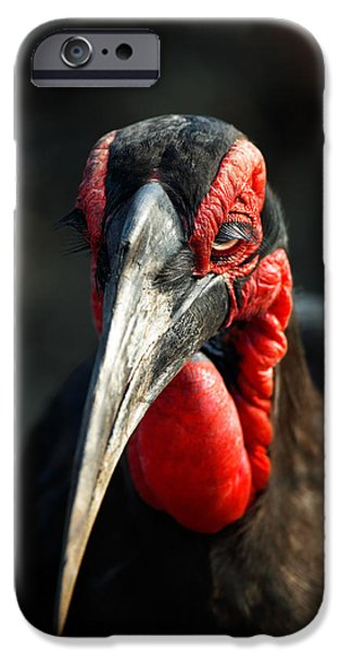 One Animal iPhone Cases - Southern Ground Hornbill portrait front view iPhone Case by Johan Swanepoel