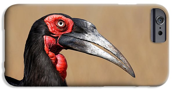 One Animal iPhone Cases - Southern Ground Hornbill portrait side view iPhone Case by Johan Swanepoel