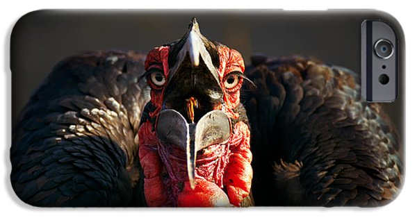 Shoulders iPhone Cases - Southern Ground Hornbill swallowing a seed iPhone Case by Johan Swanepoel