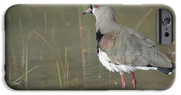 Lapwing iPhone Cases - Southern Lapwing In Marshland Pantanal iPhone Case by Tui De Roy
