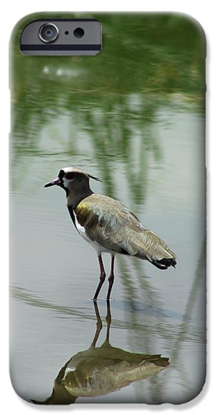 Lapwing iPhone Cases - Southern Lapwing Reflection iPhone Case by Robert Hamm