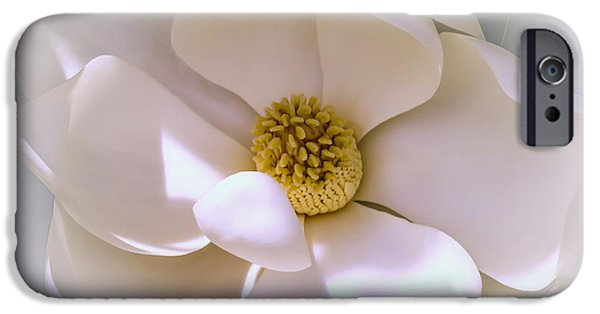 Summer iPhone Cases - Southern magnolia iPhone Case by Zina Stromberg