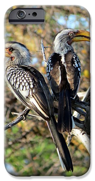 Hornbill iPhone Cases - Southern Yellow Billed Hornbills iPhone Case by Ramona Johnston