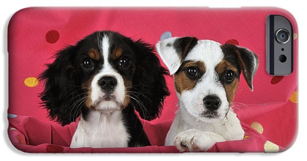 Dog Close-up iPhone Cases - Spaniel And Terrier Puppy Dogs iPhone Case by John Daniels