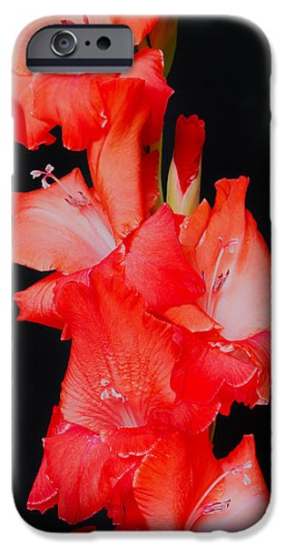 Gladiolas iPhone Cases - Spanish Dancer iPhone Case by Heidi Smith