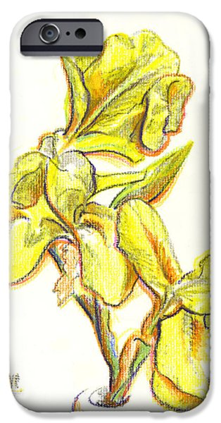 Crayons Drawings iPhone Cases - Spanish Irises iPhone Case by Kip DeVore