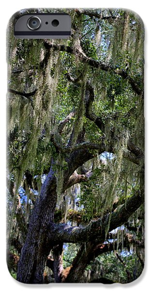 Two Stone Magnolia iPhone Cases - Spanish Moss iPhone Case by William Tucker