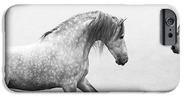 Horse iPhone Cases - Spanish Stallion Approches the Mares iPhone Case by Carol Walker