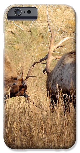 Sparring Elk iPhone Case by Robert Frederick