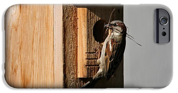 Sparrow iPhone Cases - Sparrow Nest And Birdhouse iPhone Case by Dan Sproul