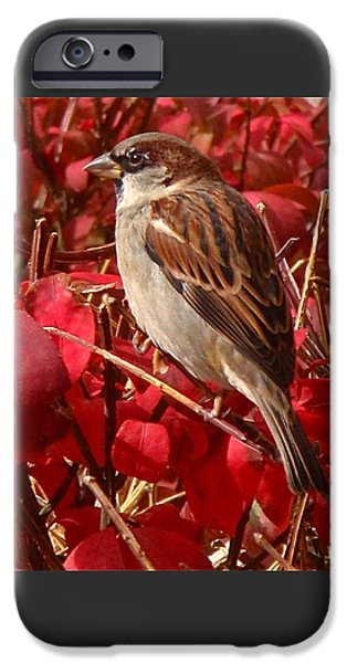 Bird Photographs iPhone Cases - Sparrow iPhone Case by Rona Black