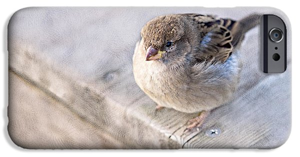 Fed Photographs iPhone Cases - Sparrow - Takeoff Problems iPhone Case by Alexander Senin