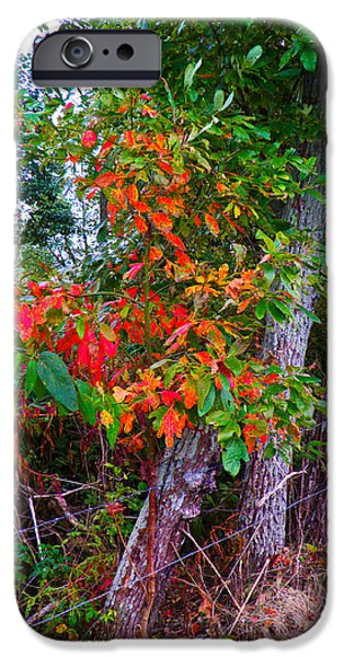 Autumn iPhone Cases - Spash of Red iPhone Case by Nick Kirby