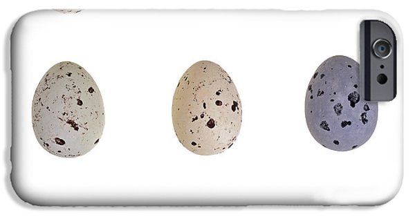 Hard Candies iPhone Cases - Speckled egg tic-tac-toe iPhone Case by Jane Rix
